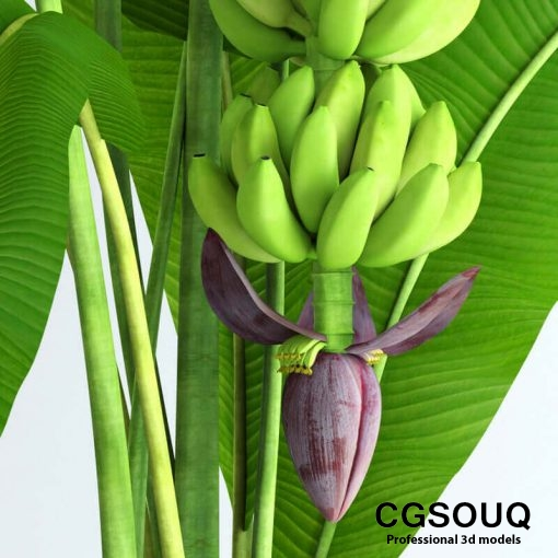 Banana tree with moss 3D model 5