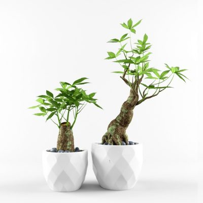 Bonsai Plant Indoor 3D Model 5