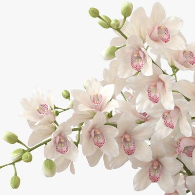 Bouquet of Orchids Flower 3D model