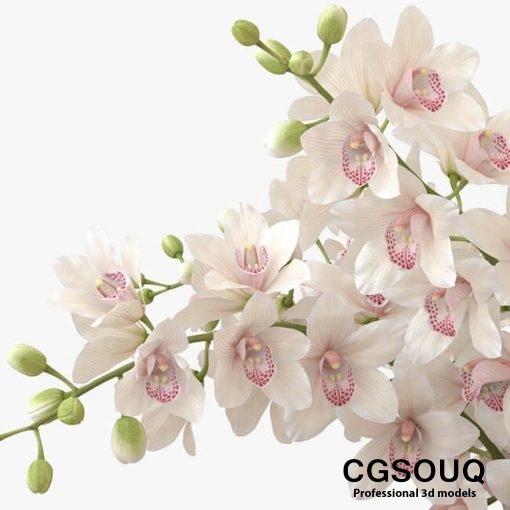 Bouquet of orchids 2