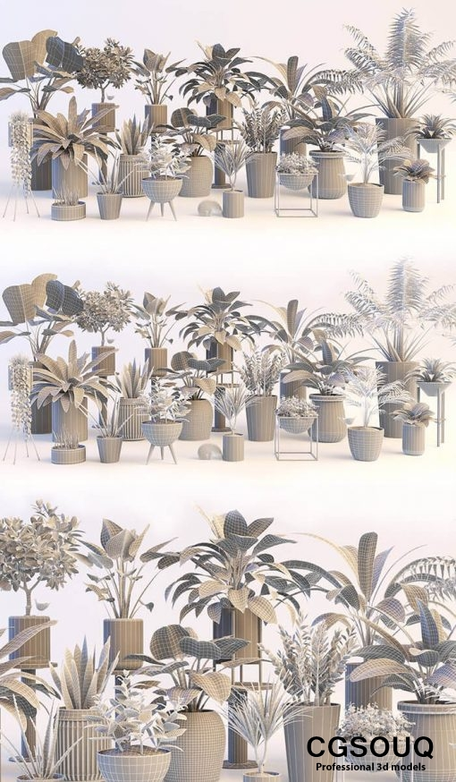 Collection of plants 3