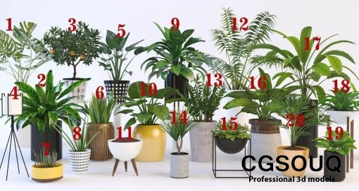 Collection of plants 4