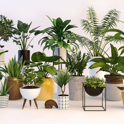 Nice collection of plants 3D model
