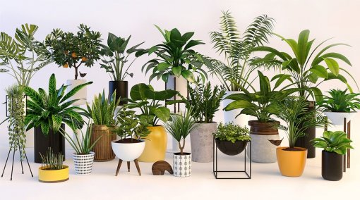 Collection of plants 5