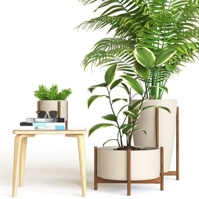 Decorative interior plant 3d model