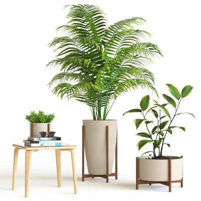 Decorative interior plant 3d model 2