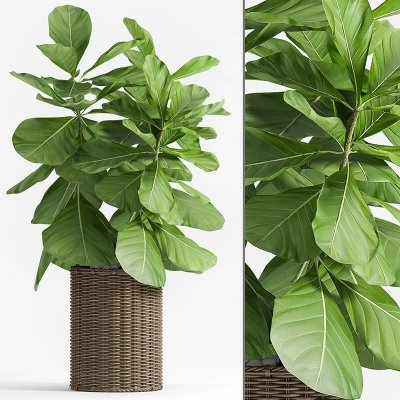 Decorative plant set-49 3D model
