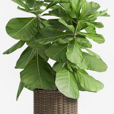 Decorative plant set-49 3D model 2-CGSouq.com
