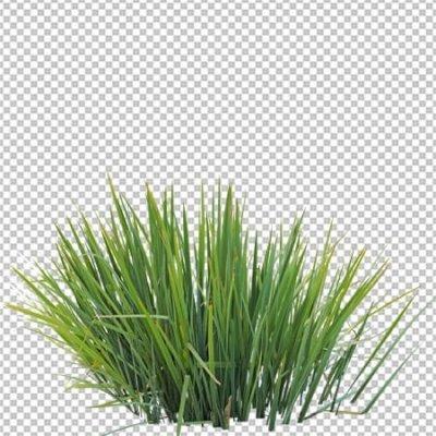 Grass Cutout PNG Format
