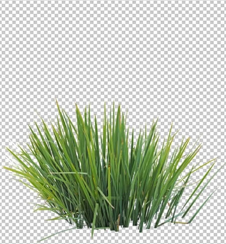 Grass Cutout Png Format For Download Cgsouq
