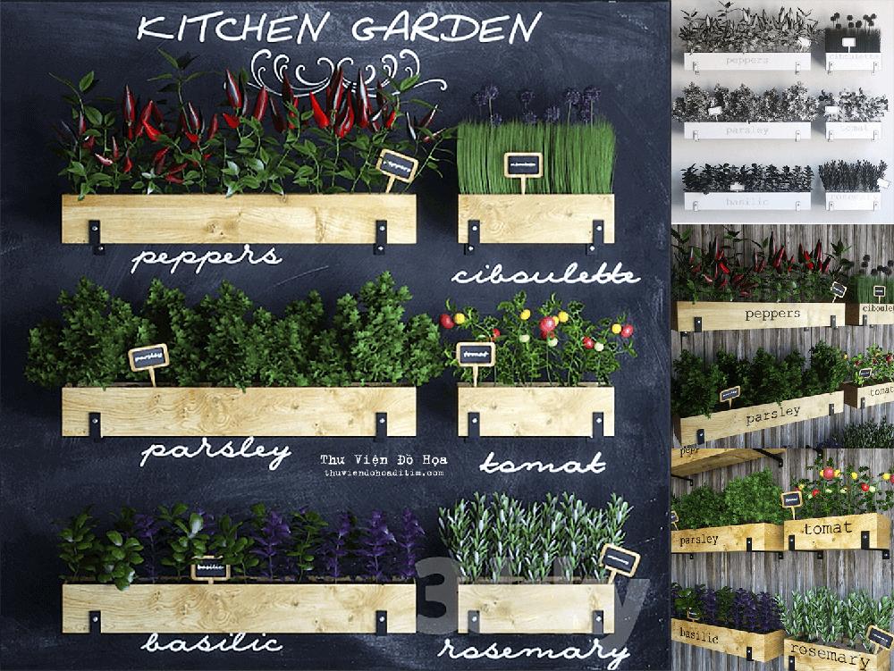 Kitchen garden 02 3D model