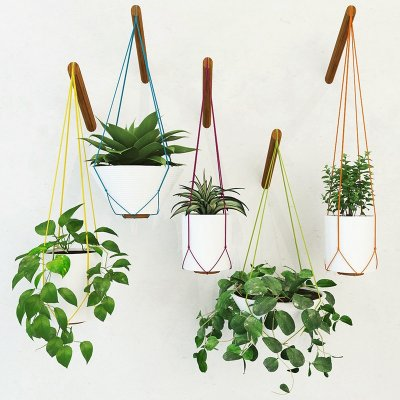 Handing pot plant 3D model