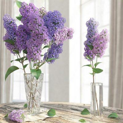 Lilac Flower in Vase 3D Model