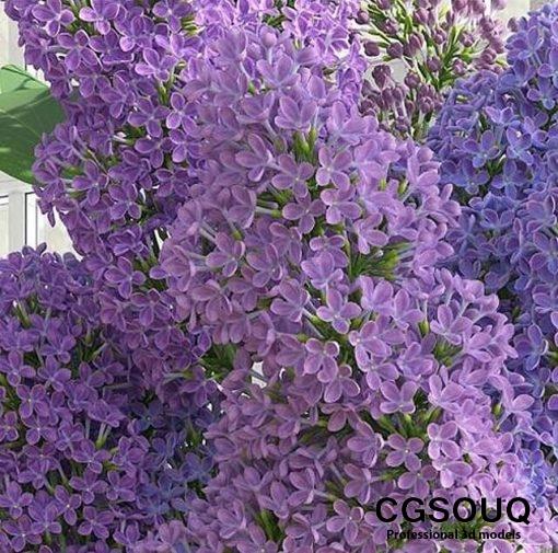 Lilac Flower in Vase 3D Model 3