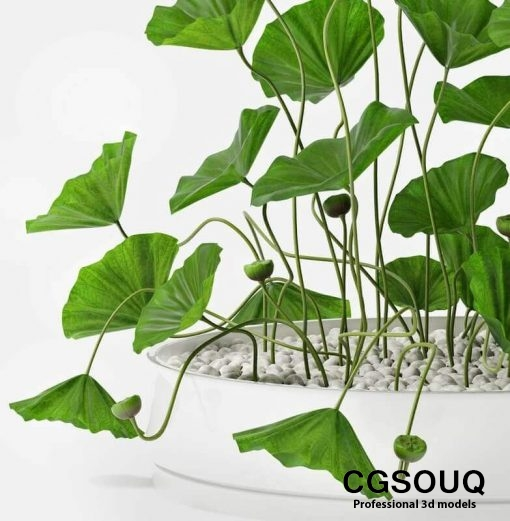 Lotus flower 3D Models 1