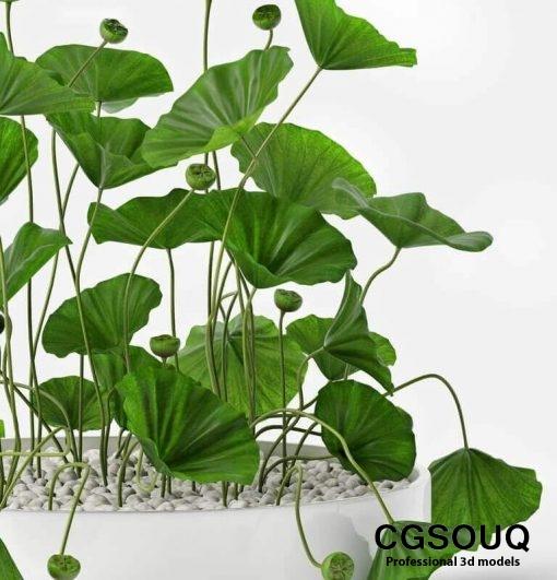 Lotus flower 3D Models 2