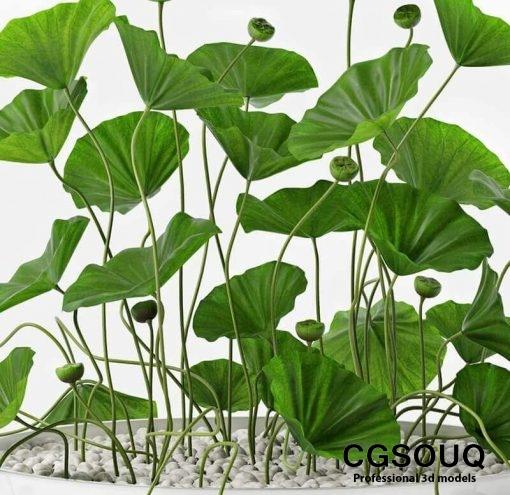 Lotus flower 3D Models 3