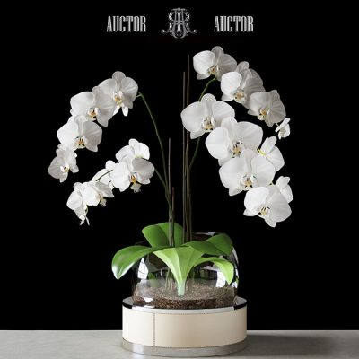 Orchid ART Auctor 3D Model