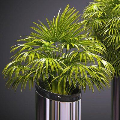 Palm plants 53 3d model