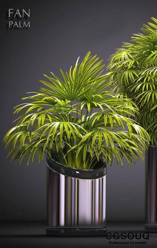 Palm plants 53 3d model 2