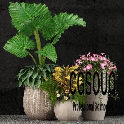 Plant 52 3D model