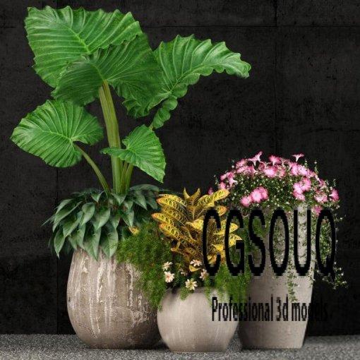 Indoor Plant 52 3D model