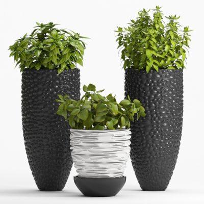 Decor Plant 3D Model