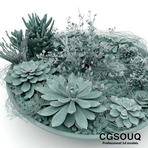 Succulent Plants 3D model (1)