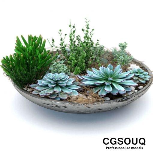 Succulent Plants 3D model (2)