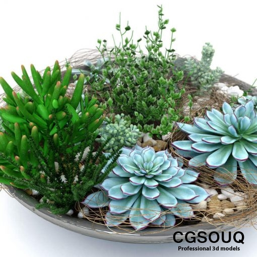 Succulent Plants 3D model (3)