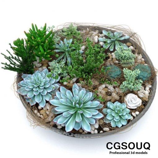 Succulent Plants 3D model (4)