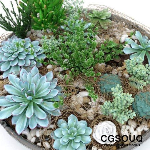 Succulent Plants 3D model (5)