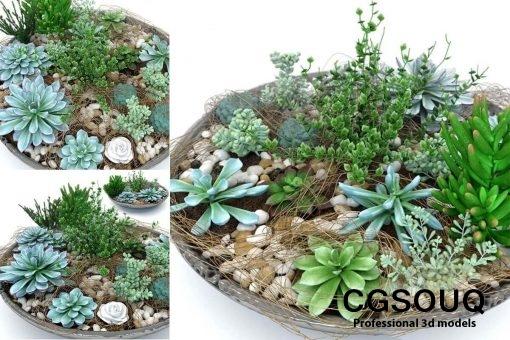 Succulent Plants 3D model