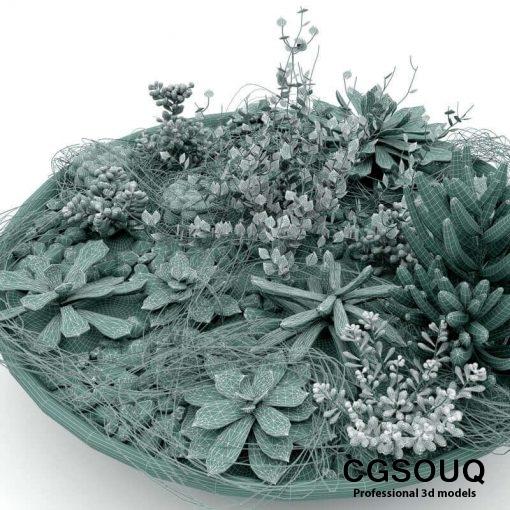 Succulent Plants 3D model (7)