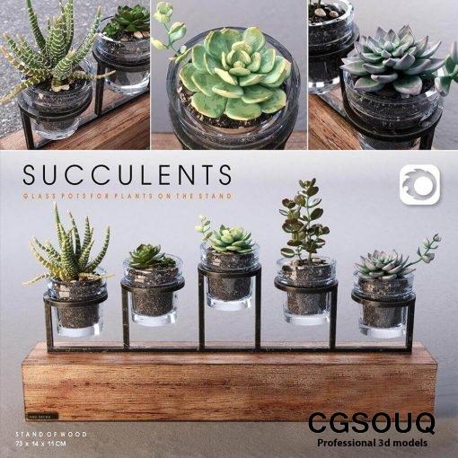 Succulent Plants in Glass Pot 3D model