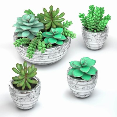 Succulent plants in pot 3D model (1)