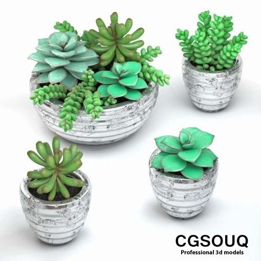 Succulent plants in pot 3D model (1)