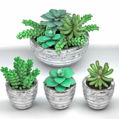 Succulent plants in pot 3D model