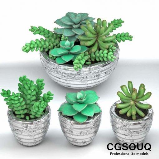 Succulent plants in pot 3D model (2)