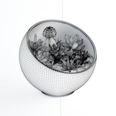 Succulent plants 02 3D model