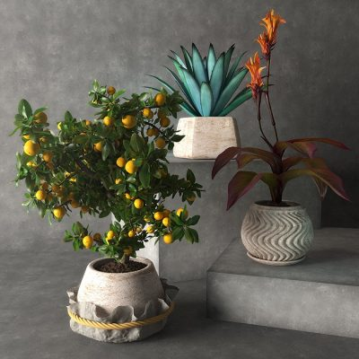 Tropical plants 3D model Preview