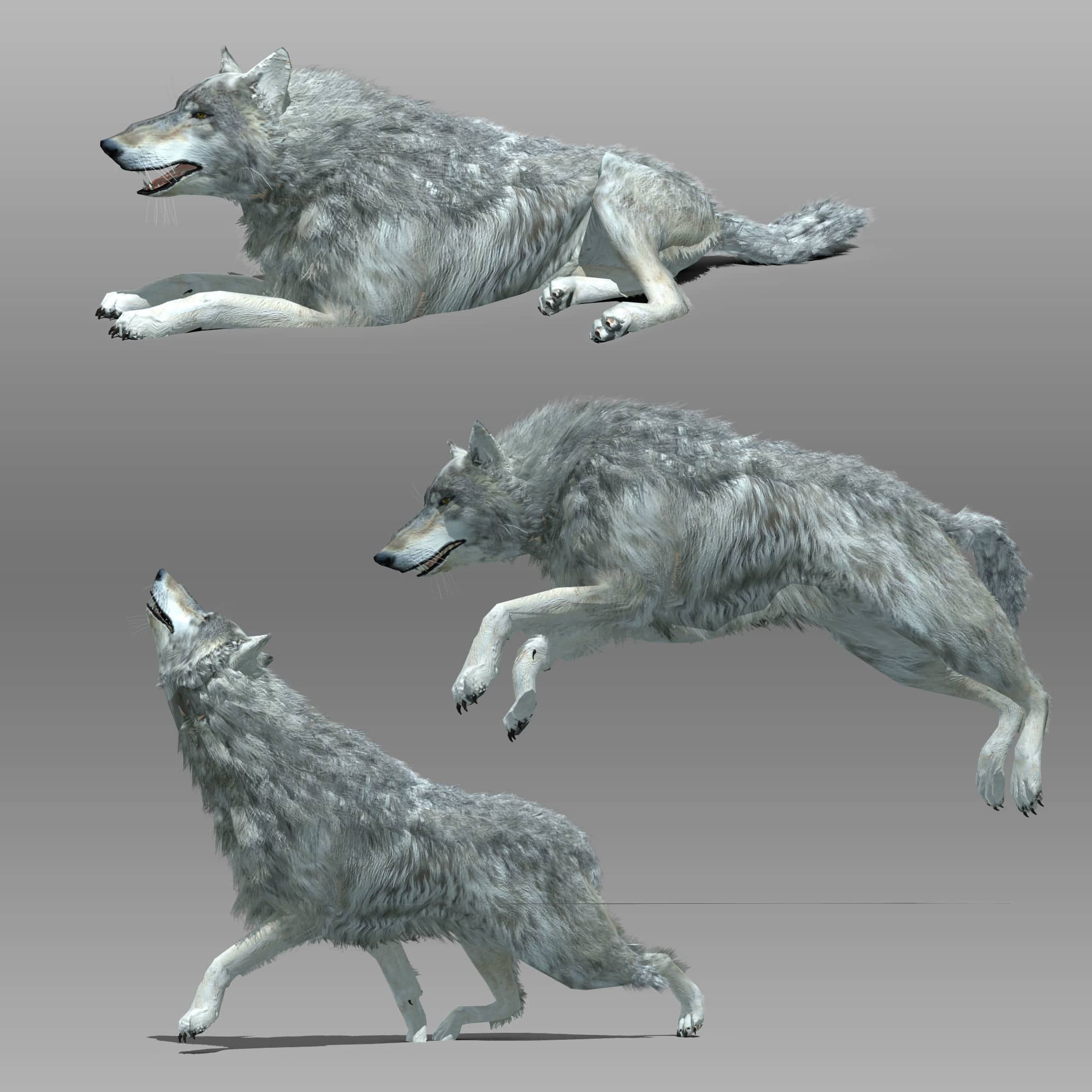 Wolf Animal Animated 3d Model For Download Cgsouq Com