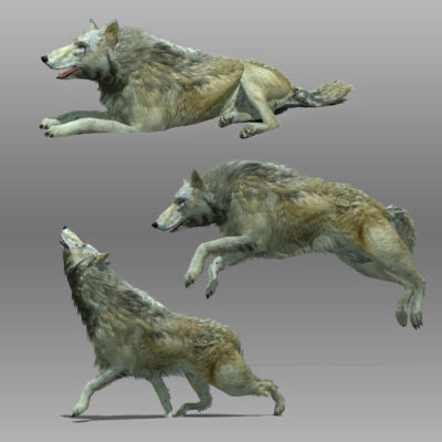 Wolf Animal Animated 3D model