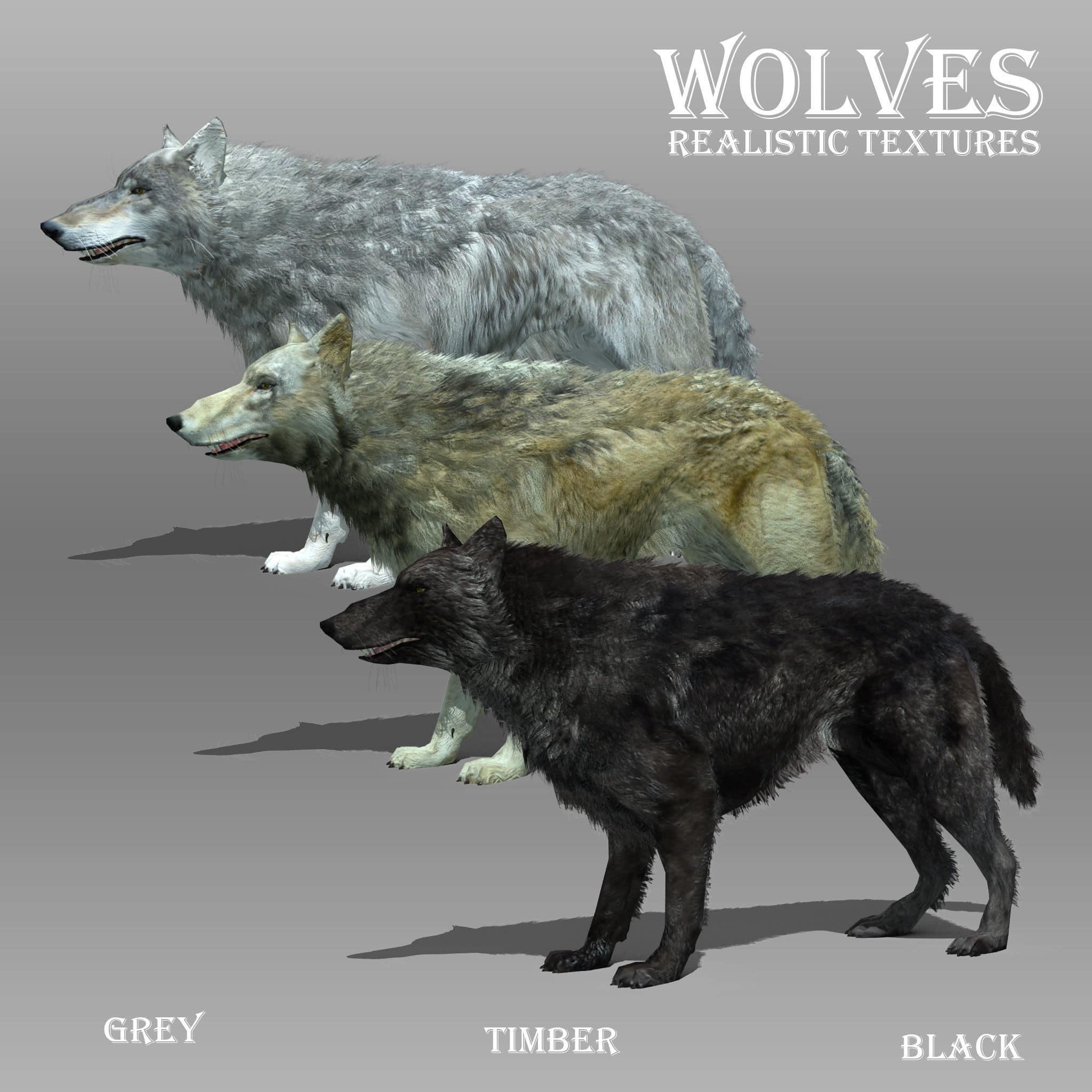 black wolf 13