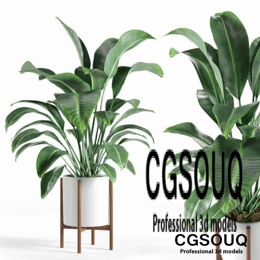 plant 3d model 1