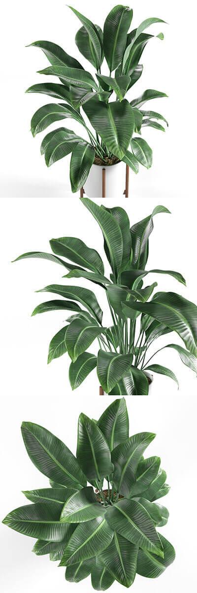 plant 3d model 2