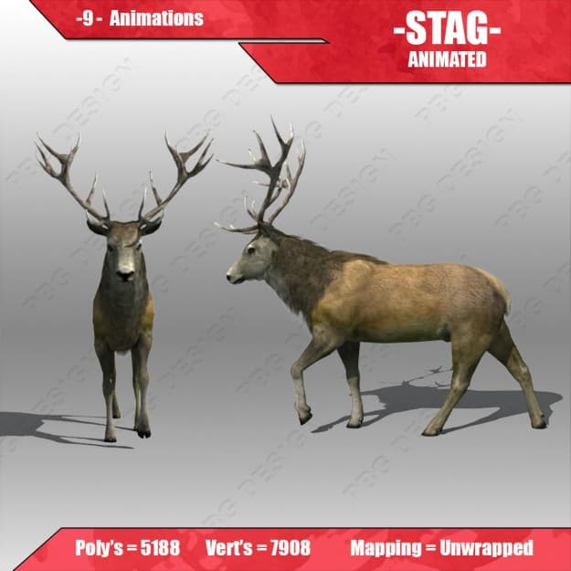 stag animated 1