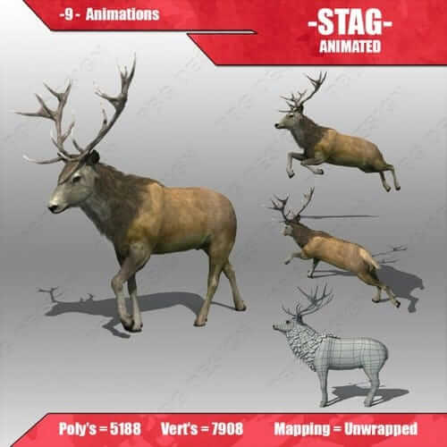stag animated 7